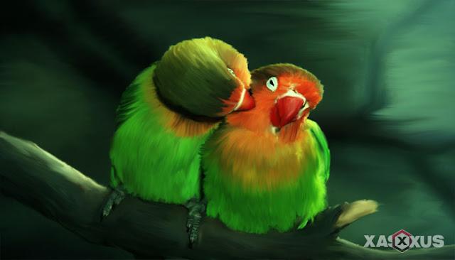 4 Cara Menjodohkan Lovebird Dengan Mudah, Ampuh, dan Efektif