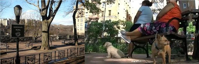 Violan dominicana en un  parque del Alto Manhattan