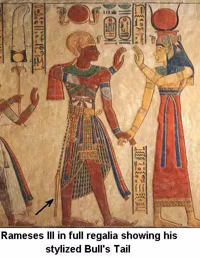 Pharaoh Bull's Tail