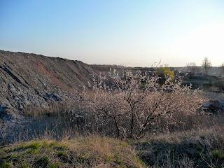 Породные отвалы на берегу реки Сенной