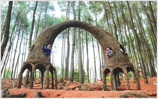 Hutan Pinus Pengger;10 Top Destinasi Wisata Bantul