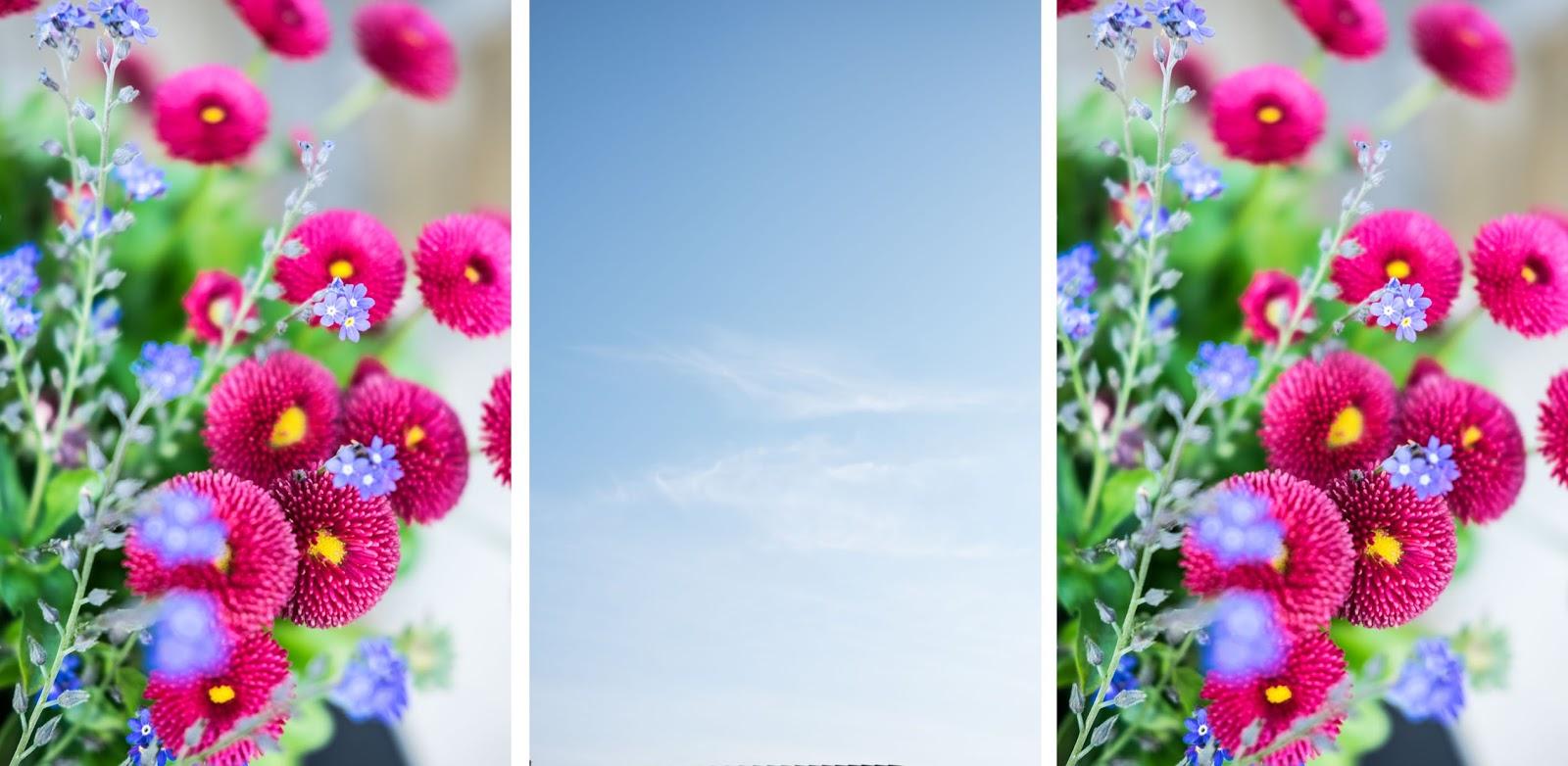 fim.works, ein Lifestyle Blog | Bellis, Vergissmeinnicht, strahlend blauer Himmel, Gartenblumen, Frühlingsblüher