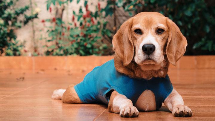good dog food for dachshunds