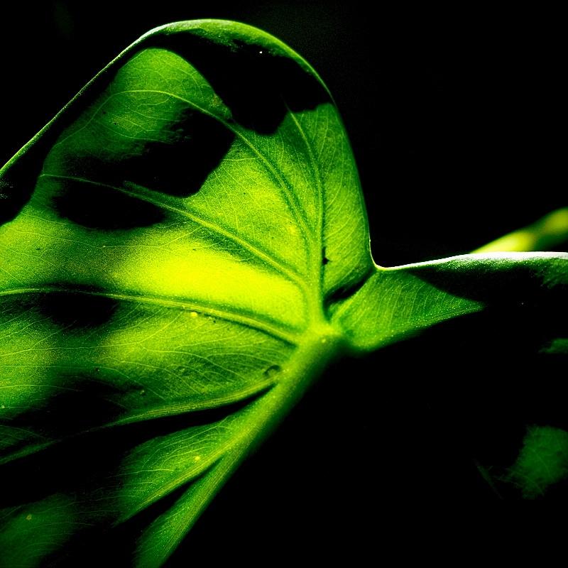 M.Zuiko Digital ED 60mm f/2.8 Macro 05