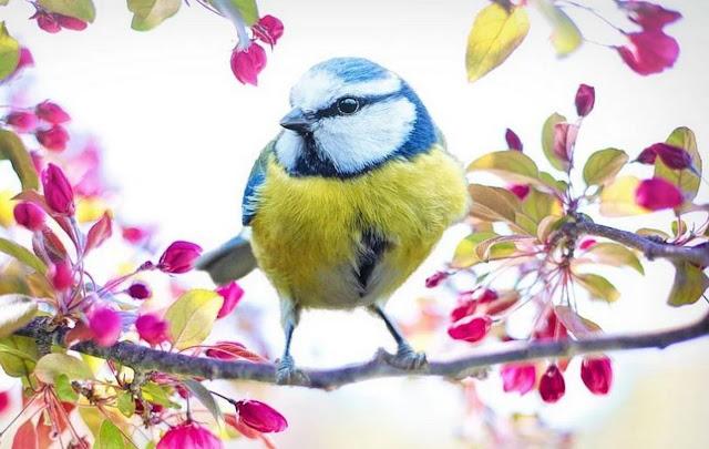 burung-peliharaan-untuk-pemula