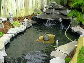 kandang-kura-kura-semi-aquatic.jpg