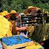 Za vikend peti Međunarodni kongres pčelarstva u Tuzli