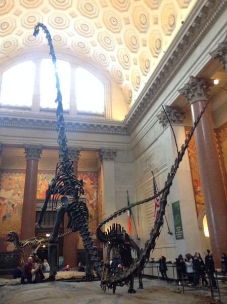 dinosaur skeleton at American Museum of Natural History, NYC