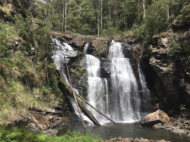 waterfall with fallen  logs
