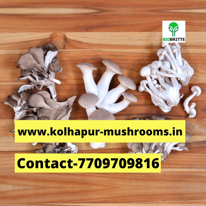 Mushroom training center near me | Mushroom cultivation | Biobritte mushrooms