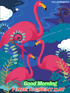 good morning flamingo birds illustration flamingo greeting