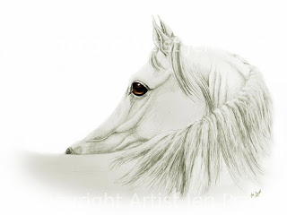 horse drawings, equine art, horse head drawing