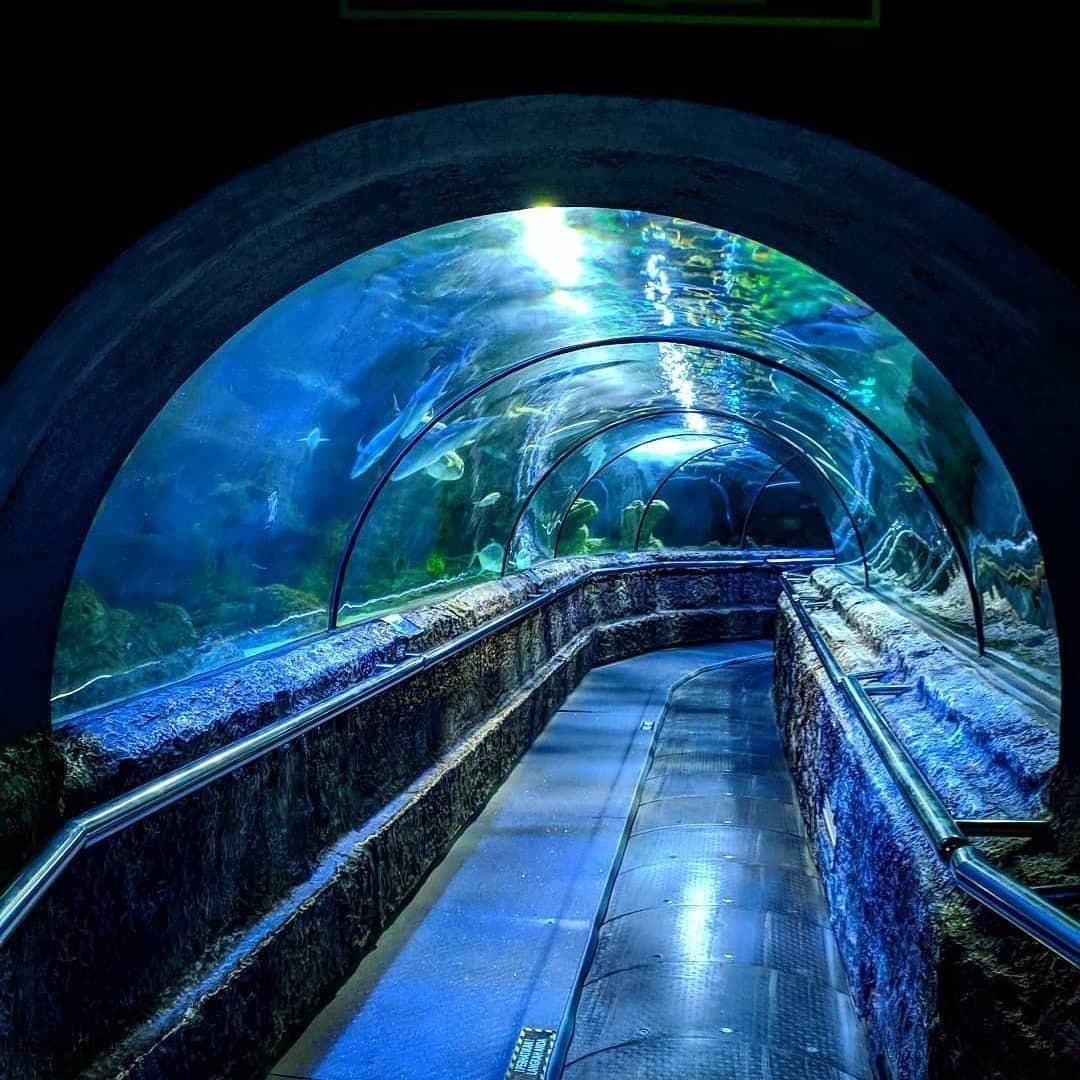 Ancol Seaworld