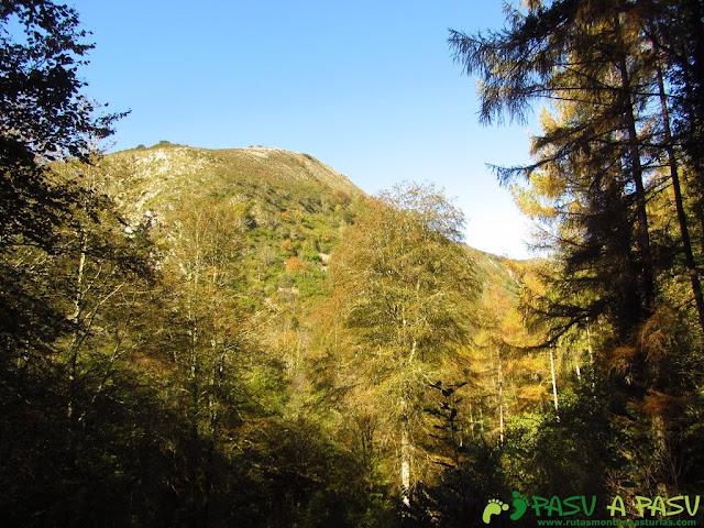 Bosque de Cea en la parte baja