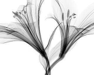 Black and white translucent flower heads. Photo by Matthew Schwartz on Unsplash.