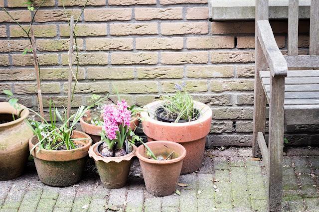 amsterdam plantas calle