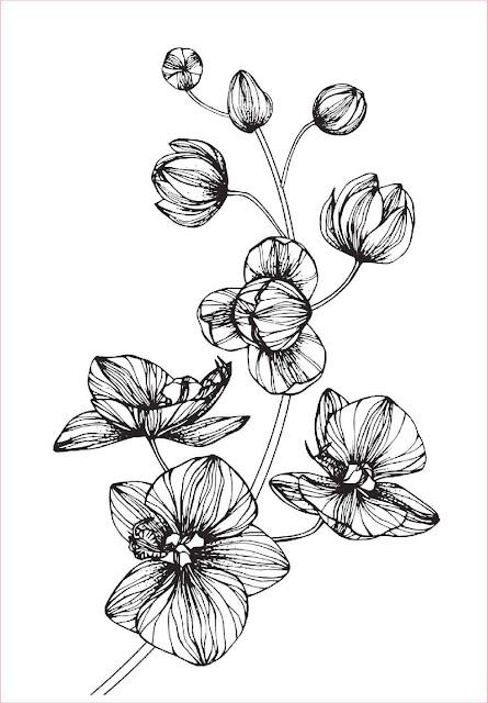 gambar-sketsa-bunga-anggrek