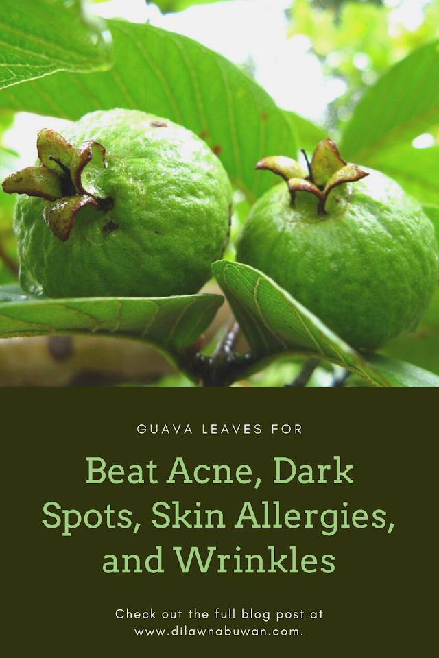 Beat Acne, Dark Spots, Skin Allergies, and Wrinkles Using Guava Leaves