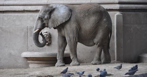 Elephant Auto Insurance Review