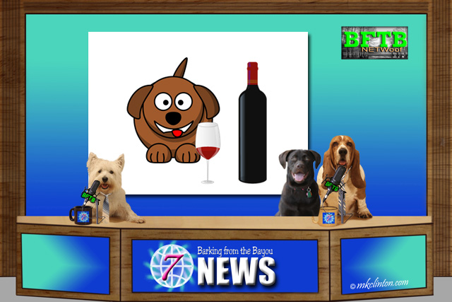 BFTB NETWoof News desk with dog anchors and dog and wine on back screen