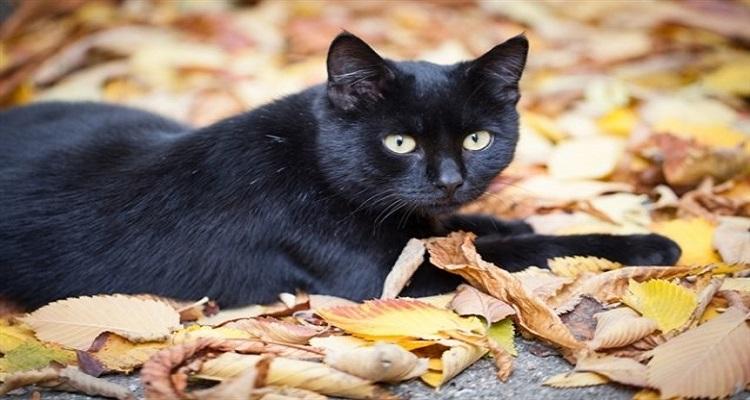بالفيديو .. الطريقه الوحيدة التي تعرف بها الفرق بين الجن والقطة