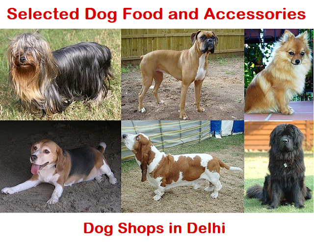 good dog shop in delhi, Delhi dog shops, dog shop near me delhi, best dog shop in delhi, dog price in delhi