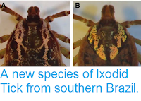 http://sciencythoughts.blogspot.co.uk/2015/01/a-new-species-of-ixodid-tick-from.html