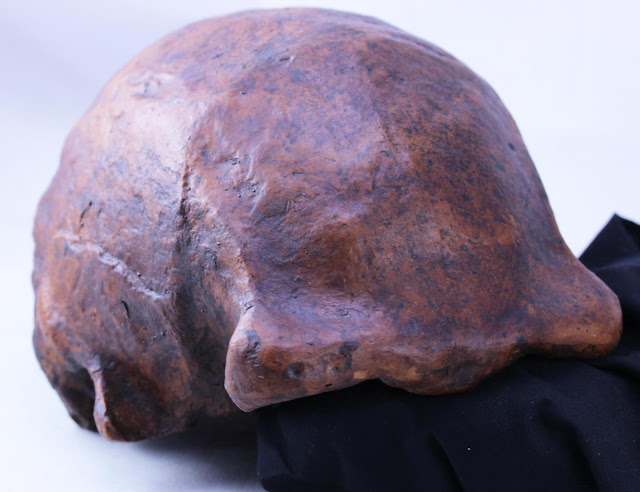 New study identifies last known occurrence of Homo erectus