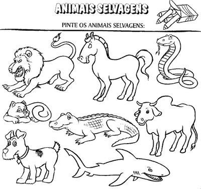 Animais Domesticos E Selvagens Atividades E Desenhos V
