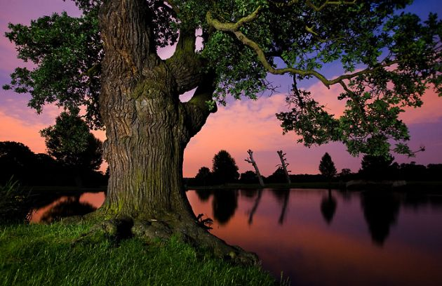 Alex Saberi online Portfolio - Tree
