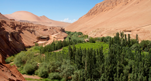 Desert garden of Turpan, China
