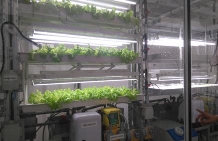 Gigantes Tecnológicos en la agricultura desastre para pequeños y medianos productores, también para
