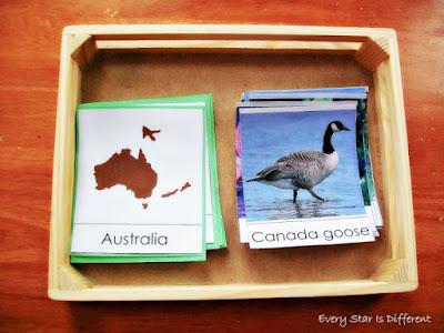 Birds & Continents Sort