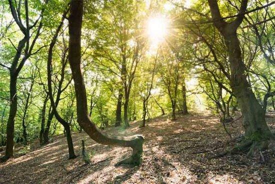 Potrebbe esserci una spiegazione perfettamente normale e banale alla strana attività e alle leggende associate alla foresta di Hoia in Romania?