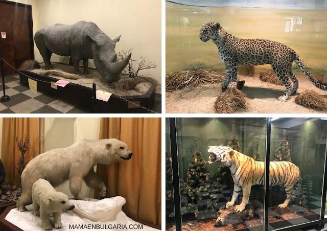 mamíferos Museo Ciencias Naturales Sofía Bulgaria