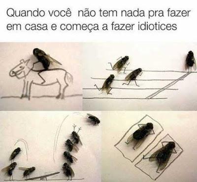 meme, humor, engraçado, melhor site de memes, memes 2019, memes brasil, memes br, eu na vida, zueira sem limites, humor negro, melhor site de humor, em casa, memes insetos