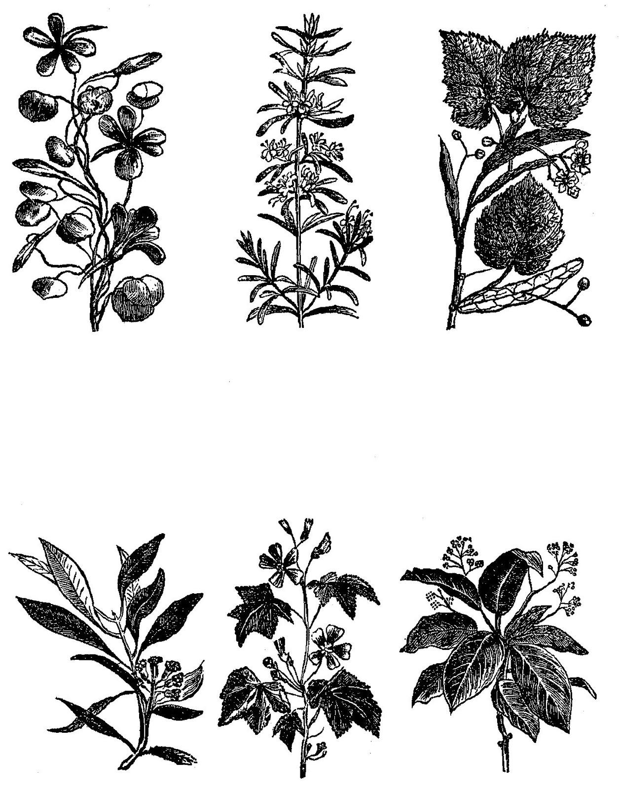 Digital Stamp Design Digital Stock Botanical Flower