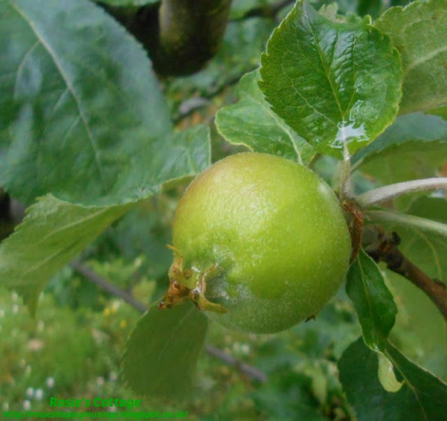 """Garden Smiles: Counting my blessings with apples, garden guests and those """"bee bombs"""" growing lovely new plants for our buzzy friends :)"""