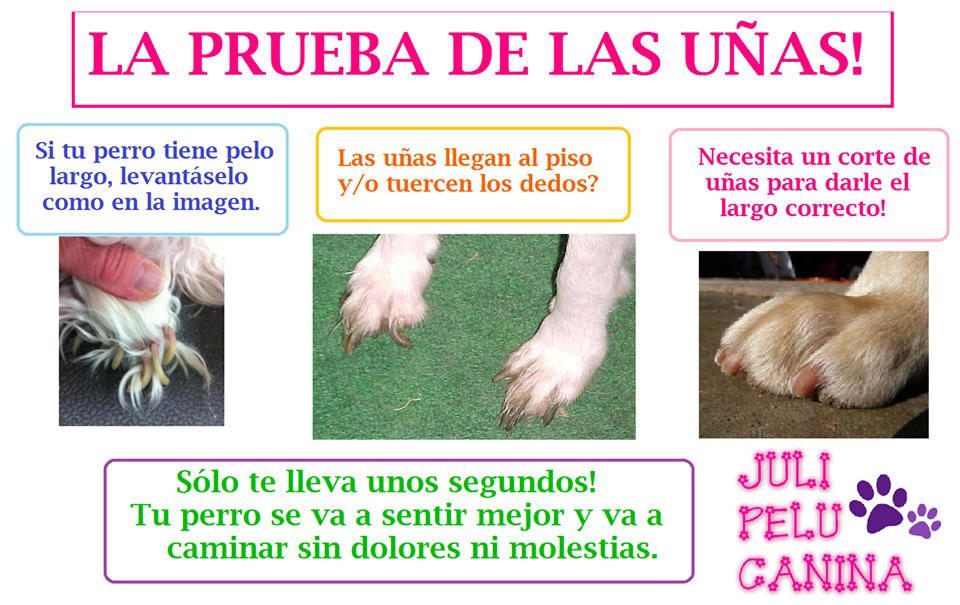 Peluquería para Perros y Gatos a Domicilio: La prueba de las uñas ...