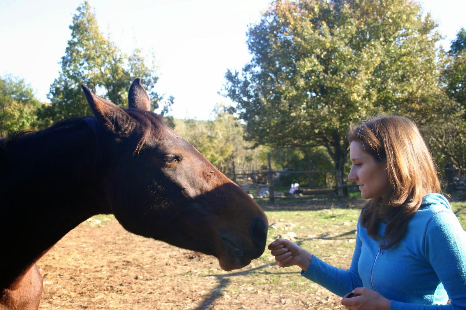 puls fühlen beim pferd