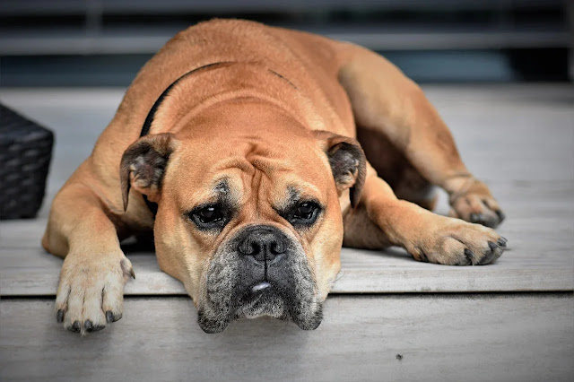 Top 32 Facts about dogs