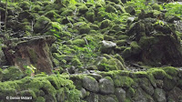 Stones from old settlements - Waimea Valley, Oahu, HI