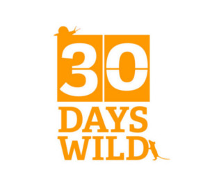 30 Days Wild Tune in by Switching Off nature challenge. Blog Kent Surrey London Sussex