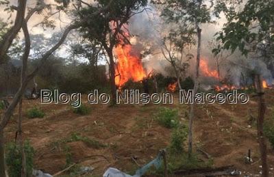 SANTA FILOMENA-PE: Polícia Militar erradica plantão com 20 mil pés de maconha