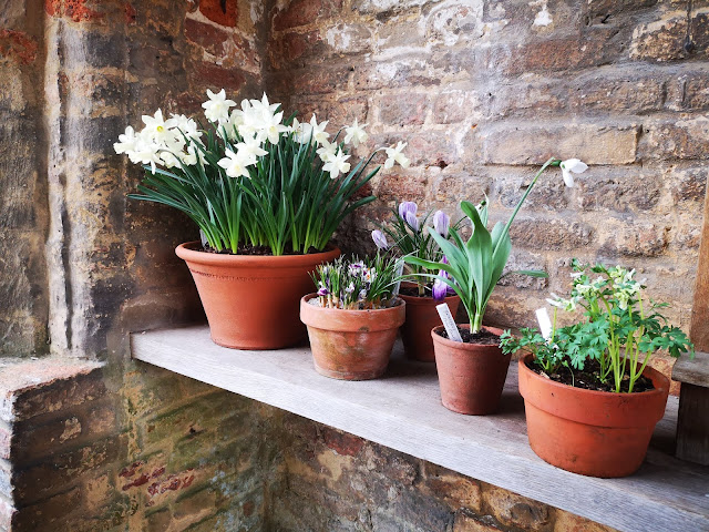 Spring plants in pots