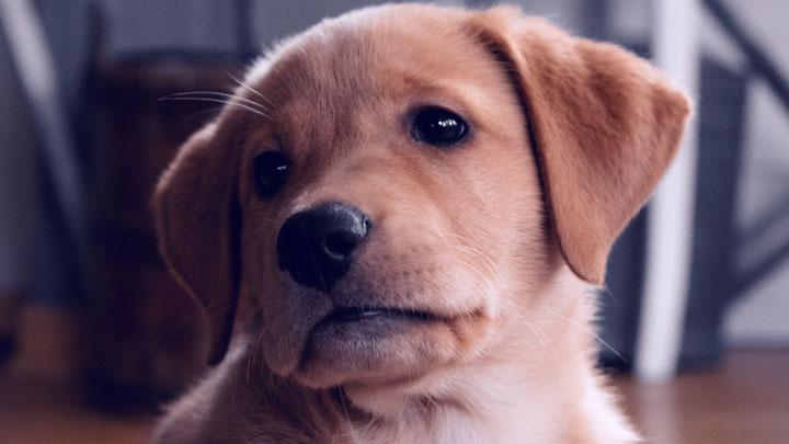dog keeps whining