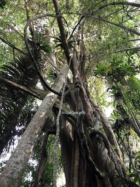 Hutan Tunggu Lawang Kampung Nagaraherang Riwayatmu Kini || ©JelajahSuwanto