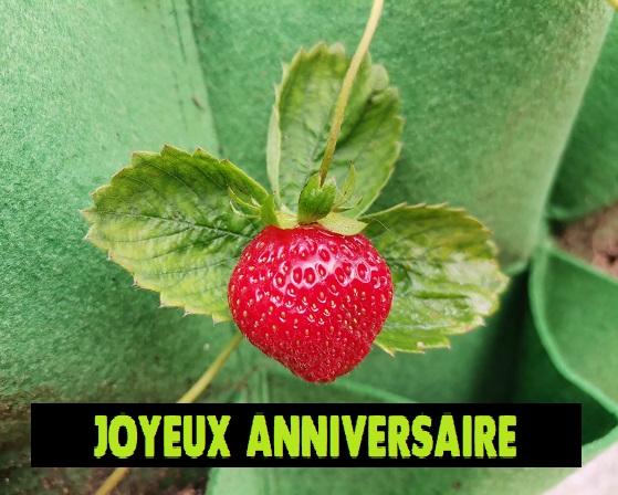 Carte de voeux d'anniversaire avec photo de fraise