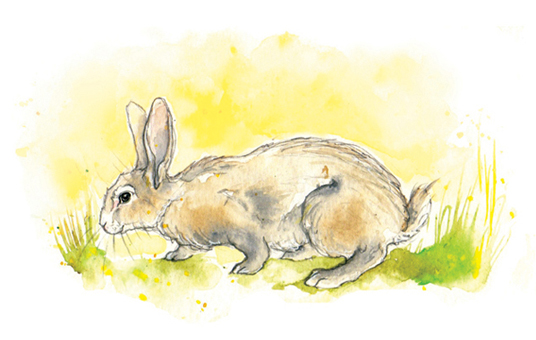 Amy Holliday Illustration : Wild Rabbits in the Sunshine