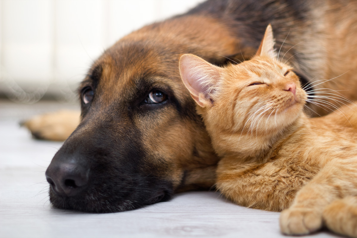 Spending More Time with Your Pet due to COVID-19? Strategies to Cope